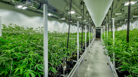 Full Service Hvac Systems For Growing Cannabis Indoors